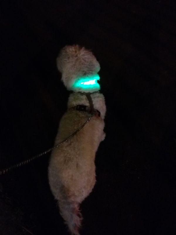 ZOOSHOP.ONLINE - Zoopreču internetveikals - Eyenimal LED kakla siksna Light Collar USB - zaļš