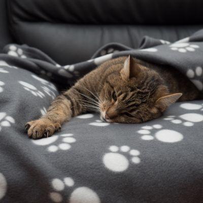ZOOSHOP.ONLINE - Zoopreču internetveikals - Mīkstā vilnas sega kaķiem un suņiem