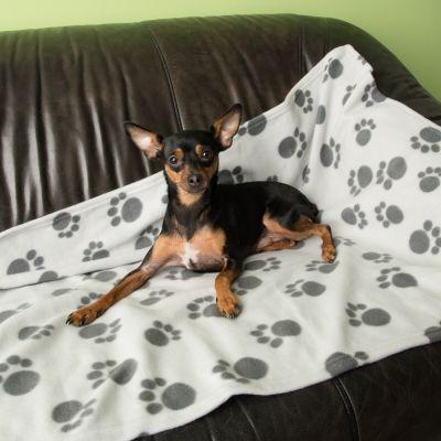 ZOOSHOP.ONLINE - Интернет-магазин зоотоваров - Mягкое флисовое одеяло для кошек и собак