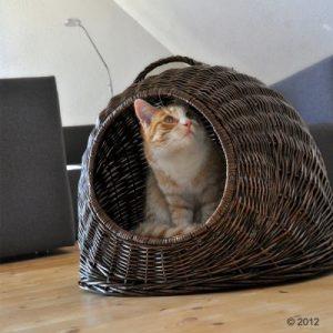 ZOOSHOP.ONLINE - Интернет-магазин зоотоваров - Плетеная корзинка для кошек XXL