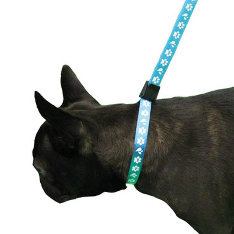 ZOOSHOP.ONLINE - Интернет-магазин зоотоваров - Нейлоновая петля для удержания собаки Amoz Pro 1.5 см / 40 см голубая