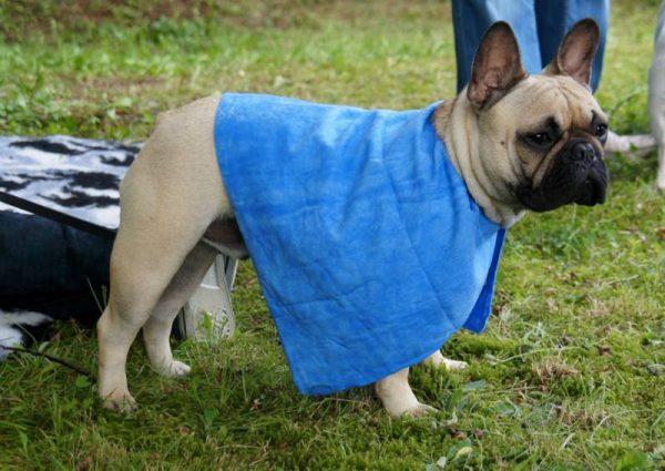 ZOOSHOP.ONLINE - Интернет-магазин зоотоваров - Охлаждающее полотенце Magic Towel 42 х 65 см