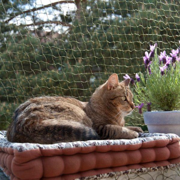 ZOOSHOP.ONLINE - Интернет-магазин зоотоваров - Защитная сетка для кошек 2 x 3 м (укреплённая)