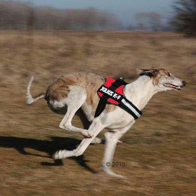 ZOOSHOP.ONLINE - Интернет-магазин зоотоваров - Шлейка для собак Julius-K9 красная Размер 1