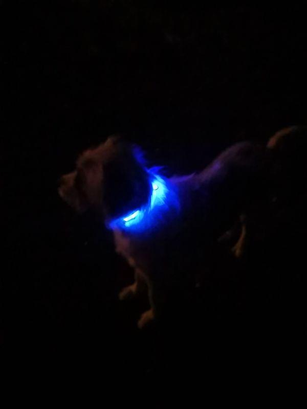 ZOOSHOP.ONLINE - Zoopreču internetveikals - Eyenimal LED kakla siksna Light Collar USB – zila izmērs M 45 - 55cm