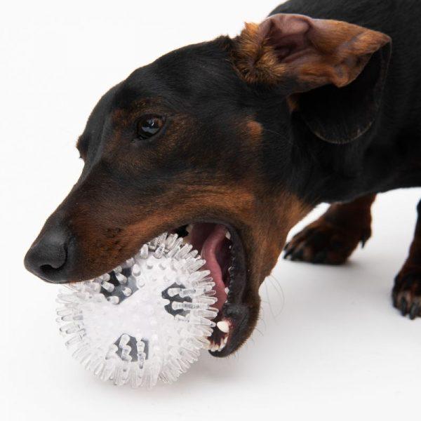 ZOOSHOP.ONLINE - Интернет-магазин зоотоваров - Игрушка для собак футбольный мяч