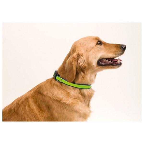 ZOOSHOP.ONLINE - Интернет-магазин зоотоваров - Ошейник с отражателем для собак 4 x 1,8 x 50 см