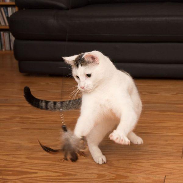 ZOOSHOP.ONLINE - Интернет-магазин зоотоваров - Игрушка для кошек 3 в 1 XXL