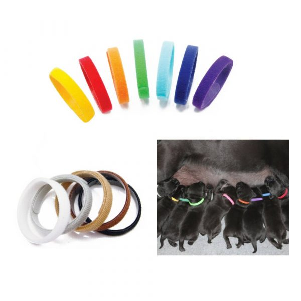 ZOOSHOP.ONLINE - Интернет-магазин зоотоваров - Doggy цветные опознавательные ошейники для щенков 12 шт